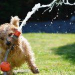 犬のストレスサインはどんな行動?解消させるためにしたいこと