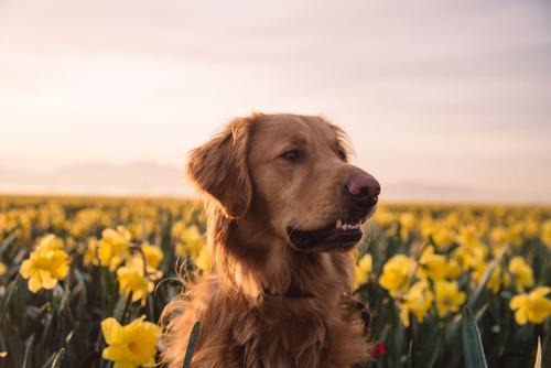 dog23