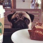 犬が夏バテで食事を食べない!食欲増進と水分補給のポイント
