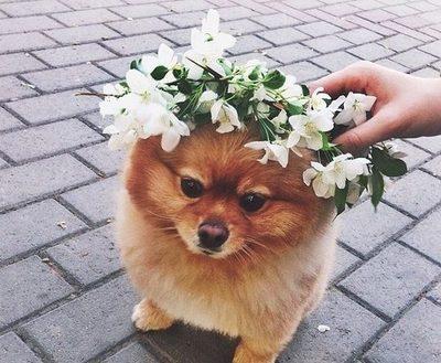 dog33