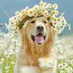フランス語で犬の名前付け!オスメス使えるおしゃれな単語まとめ