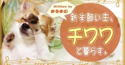 shimaichiwawa01