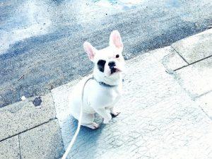 dog106