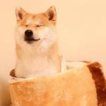 犬に和風な名前を♪オスメスに似合う漢字や和菓子のネーミング!
