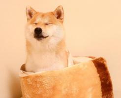 dog82.jpg