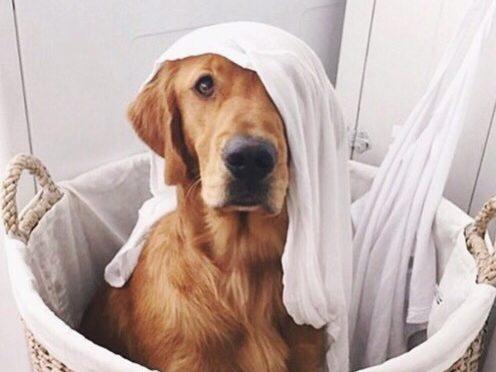 dog96