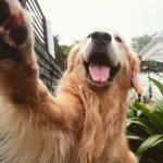 犬の肉球のカサカサひび割れ!肉球ケアとクリームの使い方