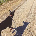 夏の犬散歩。時間帯や暑さ対策はこんな工夫をしよう!