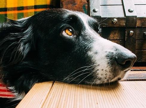 dog258