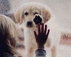 dog287