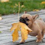 犬が銀杏を食べると中毒に!?食べた時の症状と対応について