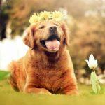 犬に危険な秋の植物!食べる・触れるで中毒になる有害植物まとめ