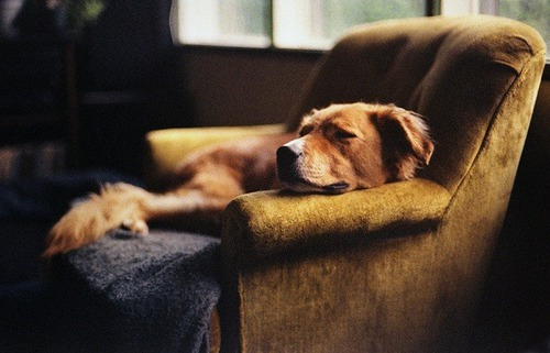 dog335