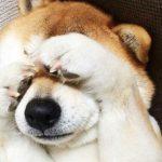 犬が台風を怖がるのはなぜ?雷や暴風雨が怖い子の安全対策