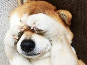 dog341