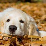 秋ノミ・マダニに要注意!寒い時期も愛犬のノミ駆除を忘れずに!