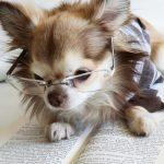 犬のワクチン接種で予防できる病気とは?種類選びは慎重に!