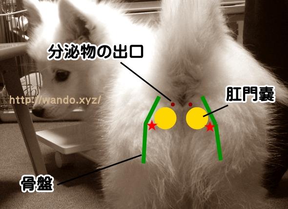 doghip02