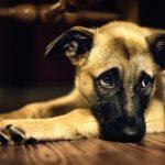 犬のお腹が鳴る原因は?病気のサイン?家で様子を見る時の対応策!