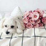 白い犬の名前をおしゃれでかっこよく!オスメスOKの名付け集!