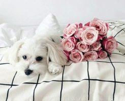 dog367