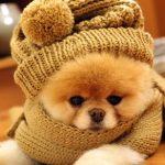 愛犬が寒さで体調不良や病気に?秋冬の冷えにご用心!