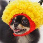 節分を愛犬と楽しもう♪豆まきの工夫や犬用節分アイテムも!