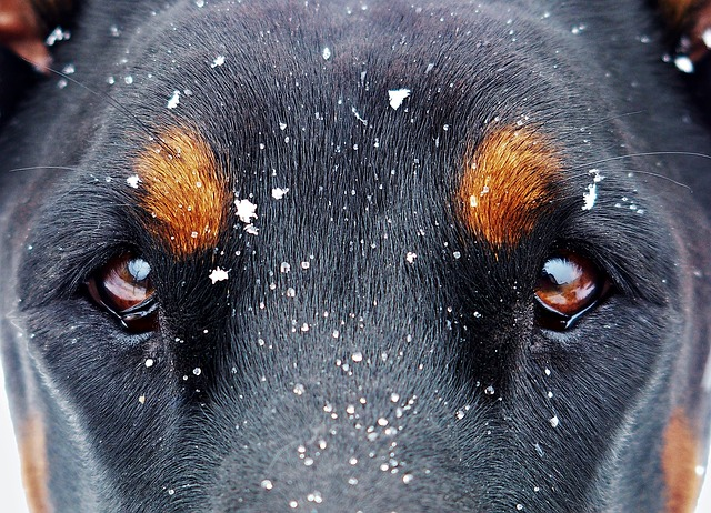 lunas-eyes-and-the-snow-flakes-1133707_640