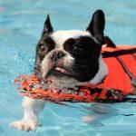 犬の泳ぐ練習の教え方!泳げない・水嫌いはこうして克服しよう。