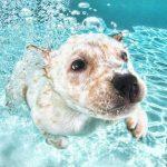 犬の水遊びの注意点!熱中症や低体温症、ヤケドを起こすことも!?