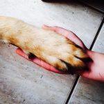 小型犬を飼う年間費用はいくら?毎月かかるお金を計算してみた