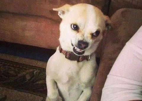 dog54