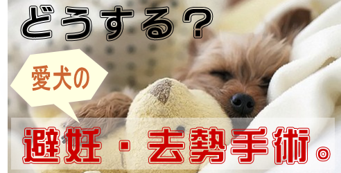 愛犬の避妊去勢手術