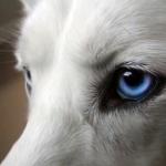 犬の目薬のさし方。嫌がる子でもラクに点眼するコツ!