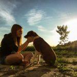 犬種別!年齢換算と平均寿命 トイプードルやチワワは長生きってほんと?