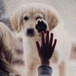 「虹の橋」で愛犬は待っている。ペットロスから多くの人を救う詩