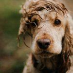 台風がきた!室外犬の安全対策と避難方法。犬小屋は浸水の危険も?