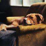 犬も台風で体調不良に?気圧の変化は犬の体にも影響します!