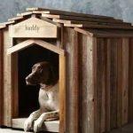 犬の防災グッズリスト!災害時の愛犬用防災セットを準備しよう