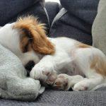 愛犬の肛門腺絞り。やり方と上手なコツを図解で解説!