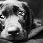 愛犬の突然死…原因は何?防ぐためにできることは?