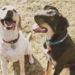 犬の予防接種。ワクチンの種類や費用は?どれを選ぶべき?