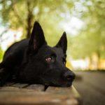 犬のノーリード散歩は危険がいっぱい!?考えられるトラブルとは