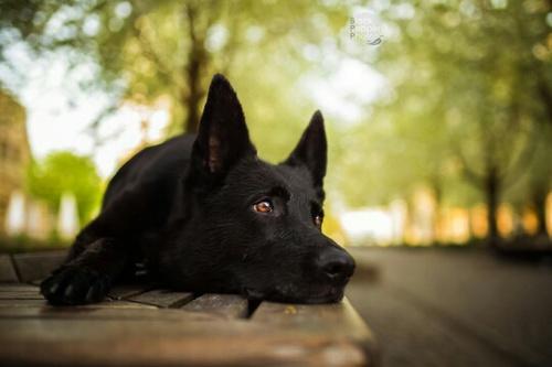 dog374