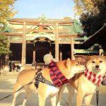 神社・寺は犬禁止!?犬連れでの参拝が歓迎されないのはなぜ?
