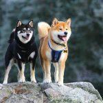 犬連れOKの神社まとめ《東京・関東編》初詣などのお参りに最適!