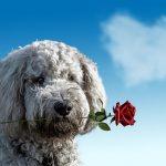 愛犬のための年末年始・大型連休の準備。もしもの時はこれで安心!