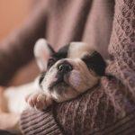 犬が夜寝ない4つの理由。落ち着かない・吠える犬をなだめるには?