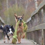 犬の喧嘩は止める・仲裁するべき?じゃれる姿との違いは?